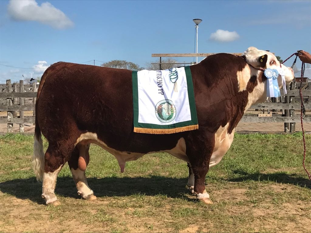 September 2018 | National Hereford.